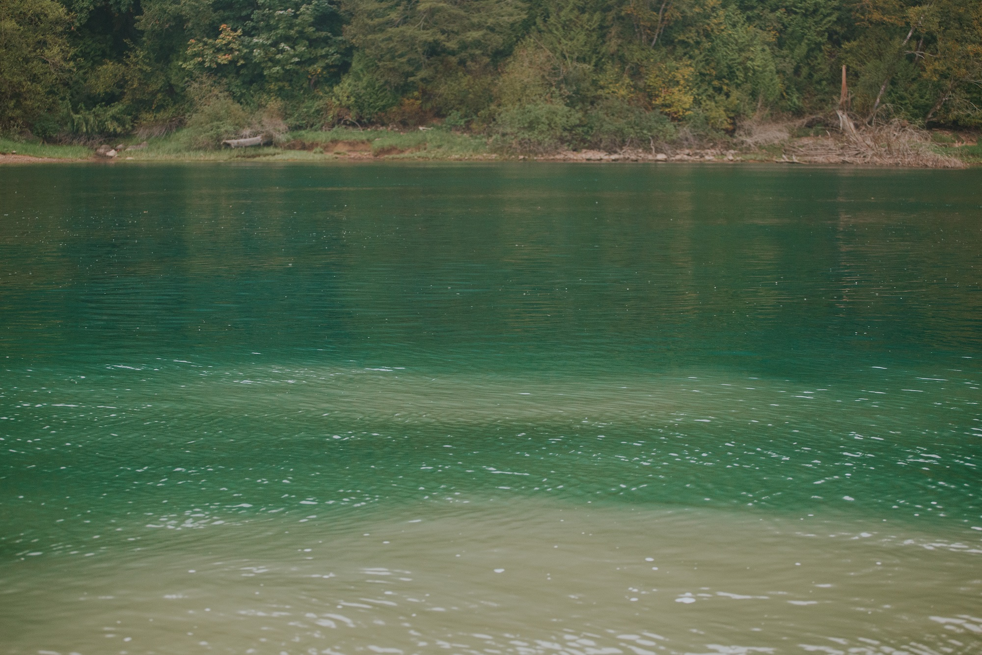 The blue-green of the Harrison River mixing with the milky colour of the Fraser River at the confluence.