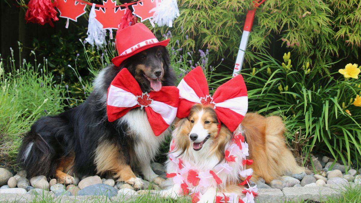 2020 Pet Parade winners